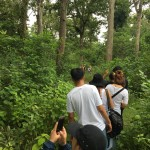 Jungle  (walk) Trek