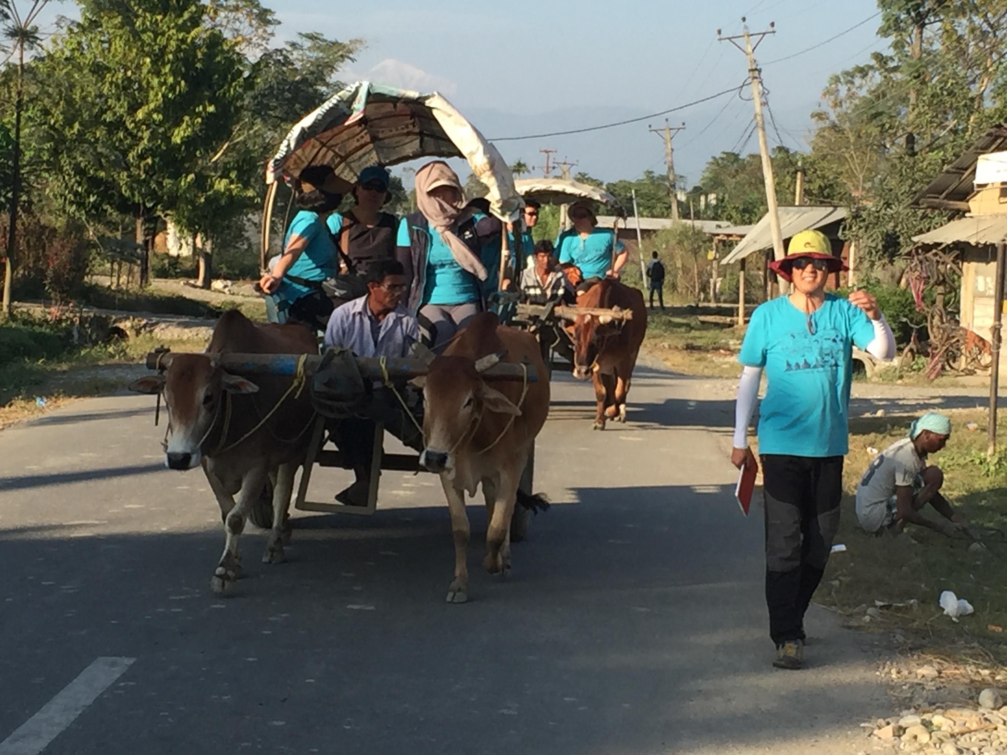 Ox Cart Riding