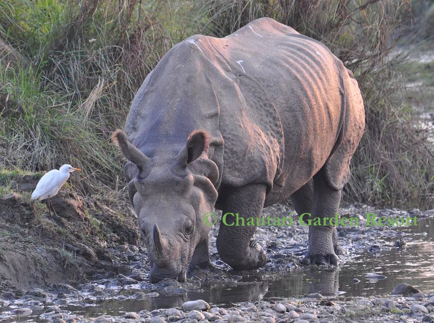 Rhinos02