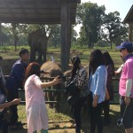 Visiting Elephant Breeding center